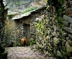 bluepueblo: Ancient Mountain Village, Portugal photo via paulo Irish Cottage, Country Life, Country Living, Country Farmhouse, Mountain Village, Stone Houses, Back Home, Trip Planning, Beautiful Places