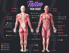 Tattoo Pain Chart and Scale - Most Painful Places To Get A Tattoo: Worst Spots and Sensitive Areas For Tattoos and How To Avoid Tattoo Pain s sforguys sformen ideas Tattoo Schmerztabelle, Tattoo Pain Chart, Knee Tattoo, Elbow Tattoos, Bicep Tattoo, Temp Tattoo, Bad Tattoos, Get A Tattoo, How To Tattoo