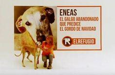 El galgo Eneas predice el Gordo de Navidad - Compra Lotería de Navidad de El Refugio a través de su web:www.elrefugio.org