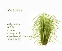 Vetiver Essential Oil magick-aromatherapy-herbs-and-oils