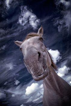 The Horse by Christel Eldrim