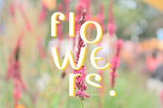 Because I love flowers and Typography!