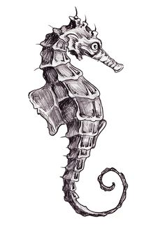 Seahorse Tattoo concept. Line drawing. Linear. Sketchy tat design. Ink. Pen and pencil.
