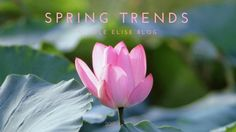 2017 Spring Trends for Real People. Blush is the new neutral for spring. From off-the-shoulders to chokers, these are trends we all can feel comfortable in.