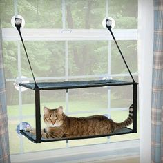K&H Manufacturing Kitty Sill Double Stack Ez Window Mount Cat Perch - Animals Cat Window Perch, Window Sill, Window Blinds, Blinds Curtains, Window Bed, Window Hanging, Room Window, Window Seats, Heated Cat Bed