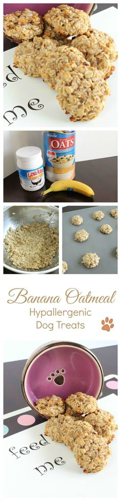 Need a yummy hypoallergenic dog treat recipe that's easy enough for novice bakers to make? Try out banana oatmeal treats! Your pups will love them!