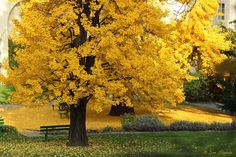 Golden Autumn by Jan  Sognnes