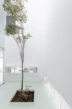 Galería de Casa V / Abraham Cota Paredes Arquitectos - 12