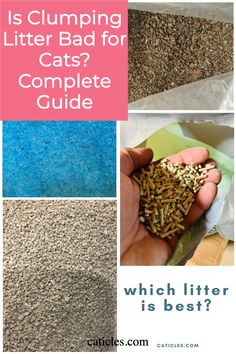 Which cat litter is best? Check out this complete guide to find out! Unfortunately many popular cat litters are not save to breathe in. Many litters like clay, wood, and silica can cause respiratory issues in humans. So of course the same hazards apply to our cats! Especially considering they sniff in the box multiple times a day. Check out this guide to choose a better cat litter today! Natural Cat Litter, Best Cat Litter, Litter Box, Cat Care Tips, Pet Care, Different Types Of Cats, Getting A Kitten, Hedgehog Pet