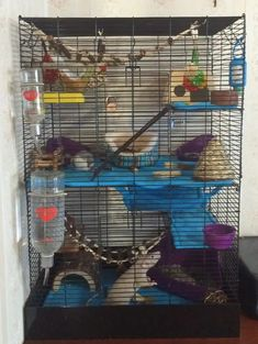 Pet Rat Cages, Pet Rats, Squirrel, Diys, Small Animals, Ferrets, Nova, Sugar, Babies