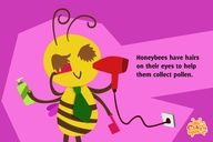 Fun #Facts for Kids Honey #bees - Cikgu.tv #e-learning for kids