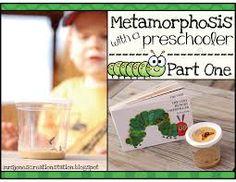 Image result for metamorphosis for preschoolers