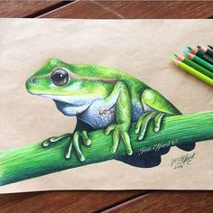 Realistic green tree frog drawing by Jess Elford. Drawn with prismacolor pencils on tab paper