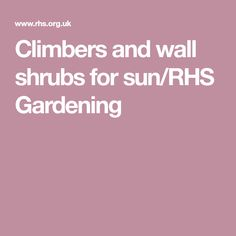 Climbers and wall shrubs for sun/RHS Gardening