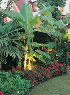 14 Tropical Plants to Create a Tropical Garden in Cold Climate