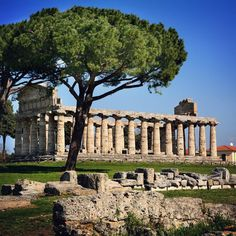 The majestic Doric temple of #Paestum remain of the ancient greek city. An #archaeological site of great importance located South of the #AmalfiCoast and North of the #Cilento Coast.
