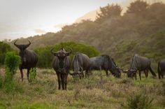 Come to Kwelanga Lodge and vacation close to nature #holiday #gardenroute  www.kwelanga.co.za