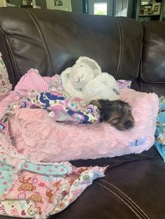Pink Dog Beds, Dog Boutique, Pink Bedding, Yorkie, Customer Service, Diva, Puppies, Amazing, Yorkies
