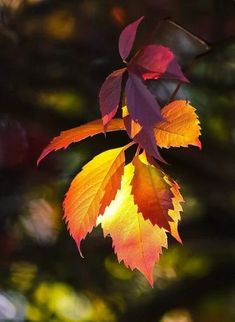 I like Pictures Fall Wallpaper, Nature Wallpaper, Fall Pictures, Nature Pictures, Autumn Scenes, Beautiful Flowers Wallpapers, Autumn Aesthetic, Autumn Photography, Leaf Art