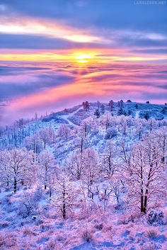 Above the Clouds (Colorado). A refreshing winter sunrise. Looking over fog/cloud-covered Colorado Springs. Beautiful World, Beautiful Images, Above The Clouds, Winter Beauty, Beautiful Sunrise, Winter Landscape, Winter Scenes, Nature Pictures, Belle Photo