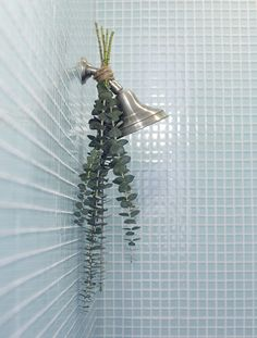 For a soothing experience in the tub, hang a eucalyptus plant from your shower head. Bathroom Plants, Bathroom Spa, Shower Plant, Plants In The Shower, Eucalyptus Shower, Spa Shower, Spa Night, Spa Day At Home, Diy Spa