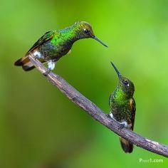 Hummingbird | Flickr - Photo Sharing!