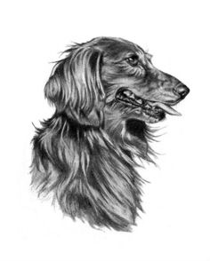 The Longhaired Doxie Sketch