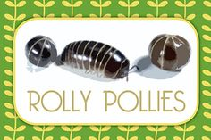 "Critter Birthday Party Snack Bar Sign - Used chocolate covered peanuts as ""Rolly Pollies"""