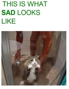 !! Sad kitty!