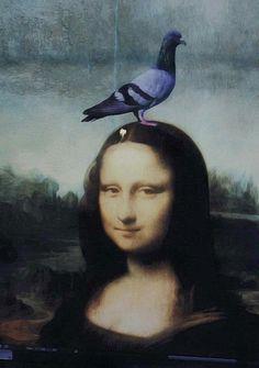 Pigeon head Lisa