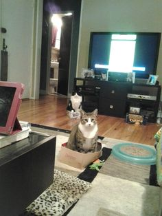 Box train? cute cats