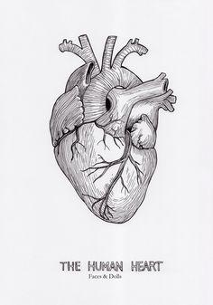 Drawing of a heart hand sketch Human Heart Drawing, Human Heart Tattoo, Heart Drawings, Human Anatomy Art, Heart Tattoo Designs, Shape Art, Hand Sketch, Heart Art, Future Tattoos
