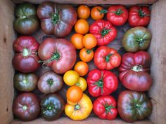 Need tomato seed ideas for your summer garden? Check out my list of seeds, both heirloom & hybrid, for eating, preserving & storage. | One tomato, two tomato