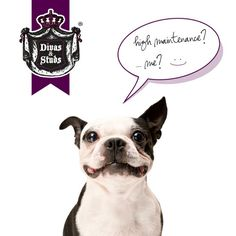 Don't forget your Divas and Studs! Find out how to take (even more) care of them at lafreshgroup.com #pets #petcare #dogs #divas #studs #care #doglove #wipes #lafresh #lafreshgroup