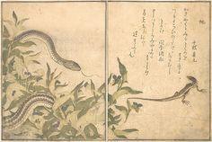 『画本虫撰』「虵」「とかけ」 <br/>Rat Snake (Hebi); Lizard or Skink (Tokage), from the Picture Book of Crawling Creatures (Ehon mushi erami)