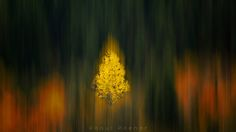 Autumn in motion - null