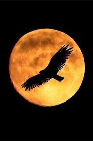 Image result for flying bird at night
