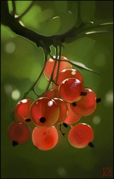 red currants by GaudiBuendia on DeviantArt
