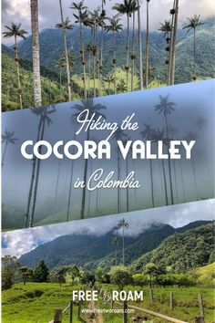 Wandern im Cocora Valley Kolumbien . Colombia Travel, Cali Colombia, Vacation Deals, Travel Deals, Palmiers, Travel Guides, Travel Tips, Travel Hacks, Travel Essentials