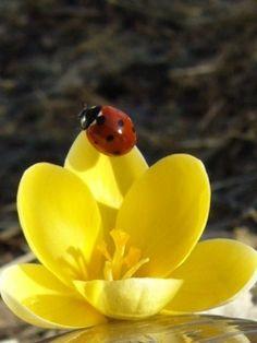 <3 Ladybug