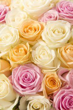 Roses de couleurs claires - Création Star Collection Créateur de juin 2014 par Sébastien Ravot, membre du Collège d'Art Floral et fleuriste Interflora Interflora France © Matthieu Langrand