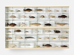 """""""Isolated Elements Swimming in the Same Direction for the purpose of understanding"""" Damien Hirst 1991"""