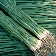 Spring Onion 'Summer Isle'  Allium fistulosum, Bunching Onion, Scallion  HardyAnnual