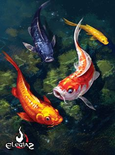 "Koi fish are the domesticated variety of common carp. Actually, the word ""koi"" comes from the Japanese word that means ""carp"". Outdoor koi ponds are relaxing. Koi Fish Drawing, Koi Fish Tattoo, Fish Drawings, Koi Art, Fish Art, Koi Painting, Watercolor Paintings, Nature Paintings, Animal Paintings"