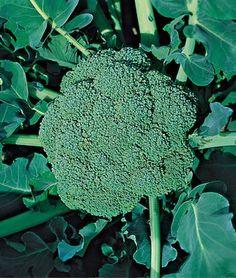 veggies to grow in the fall