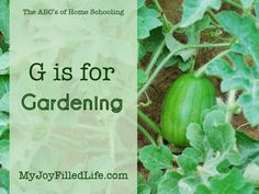 G is for Gardening - The ABCs of Homeschooling {guest post - Vicki} - My Joy-Filled Life