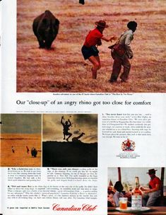 """Description: 1961 CANADIAN CLUB WHISKY vintage magazine advertisement """"angry rhino"""" -- Our """"close-up"""" of an angry rhino got too close for comfort ... """"You never know how fast you can run ... until a rhino breathes down your neck,"""" writes Don Higley, an American friend of Canadian Club ...  -- Size: The dimensions of the full-page advertisement are approximately 10.5 inches x 13.5 inches (26.75 cm x 34.25 cm). Condition: This original vintage full-page advertisement is in Excellent Condition…"""