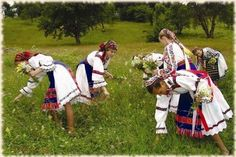 Hribi cu smantana preparati ca-n Bucovina, judetul Suceava, Bucovina.