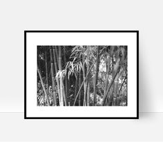 Bamboo Print, Tree Print, Bamboo Wall Art, Bamboo Forest, Bamboo Decor Bamboo Stems, Instant Download, Black and White Bamboo Print by cozyphoto on Etsy Bamboo Wall, Types Of Printer, Tree Print, Calla Lily, Botanical Prints, Cozy House, Stems, Flower Prints, Wall Art Prints
