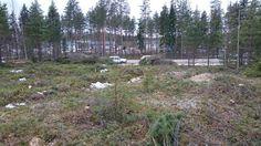 Näkymä tulevalta talonpaikalta + tien varressa tontilta kerätyt risut, oksat ja latvat.